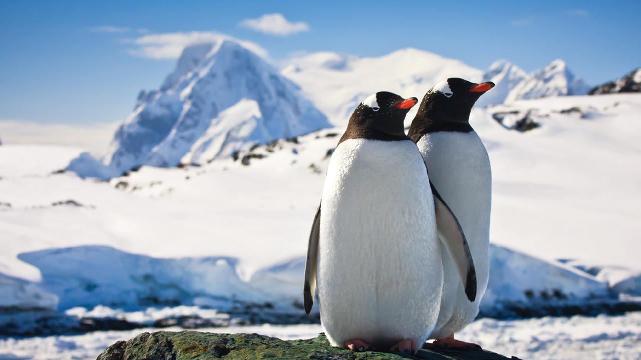 Antartica - Gentoo Penguin