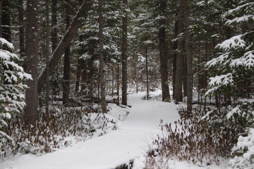 Quetico Provincial Park, ON
